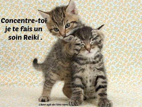 Mes chats et le Reiki