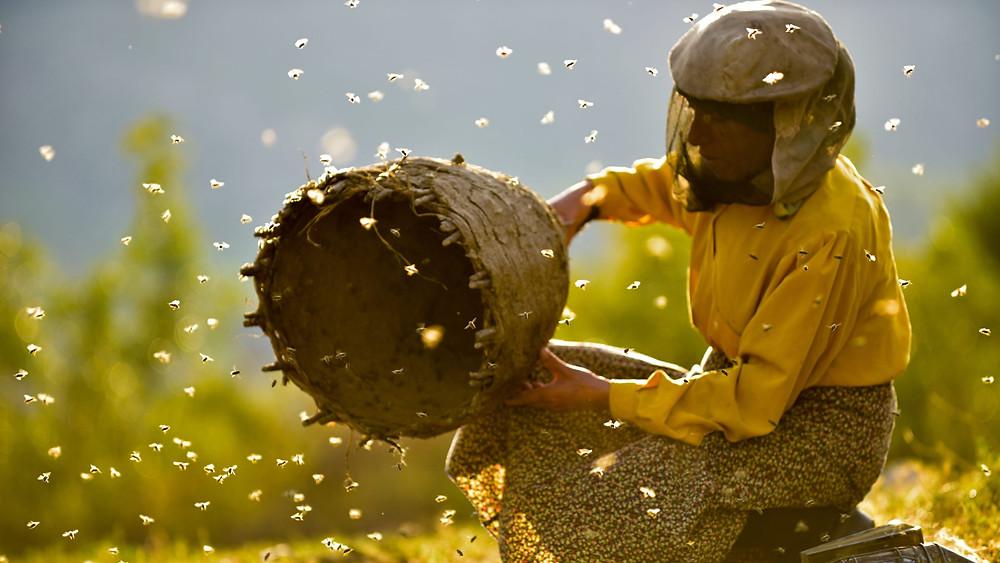 A apicultora Hatidze Muratova em cena do filme macedônio Honeyland (2019), documentário de Ljubomir Stefanov e Tamara Kotevska | Foto: Divulgação (ABMIC)
