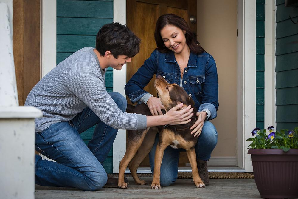 Jonah Hauer-King, Ashley Judd e Shelby em cena do filme A Caminho de Casa (2019) | Foto: Divulgação (Sony Pictures)