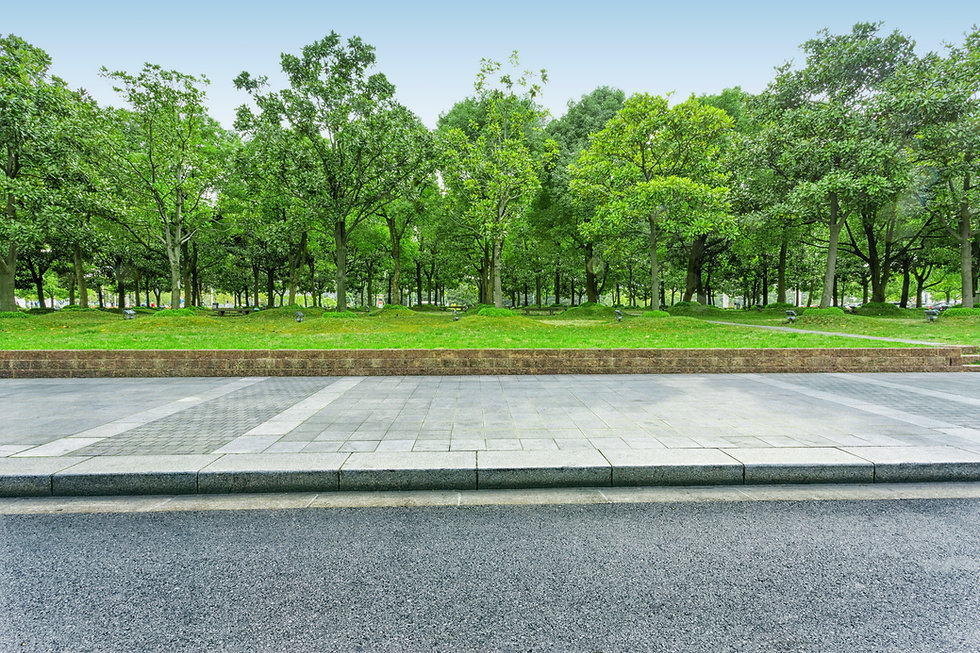 urban road with green trees.jpg