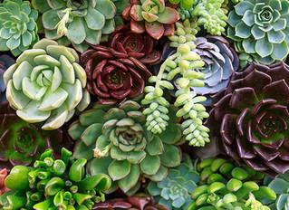 Succulent Basics Workshop March 19