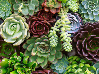 Succulent Basics Workshop March 19