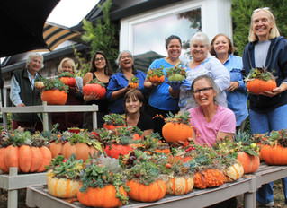 Build a Succulent Pumpkin Workshop Oct. 13