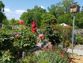 Drought is Back. Here's How the Town Green Community Garden is Saving Water in 2021