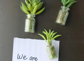 Succulents Workshops Set for Feb. 12, March 19