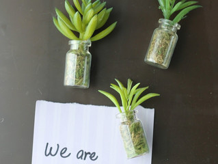 Succulents Workshops Set for Feb. 12, March 19