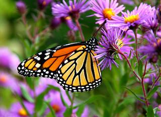 Behold Butterflies