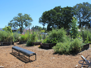 Going Fast: Still a Few Beds for Rent in the Town Green Community Garden