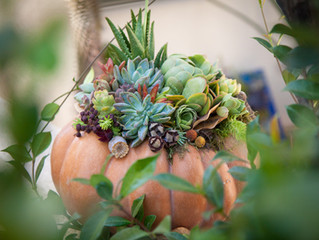 Succulent Pumpkin Sale Goes Online for 2020