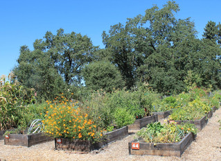 Community Garden Changes Coming in 2020