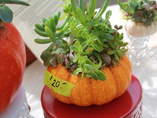 Calling All Members: Help Build Succulent Pumpkins!
