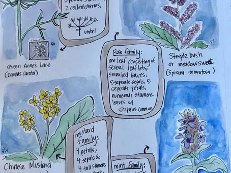 Nature Journaling Flowers with Naturalist Serena Sanborn - July 31@ 10am (Rain Date: August 1)