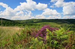 The Ashdown Forest