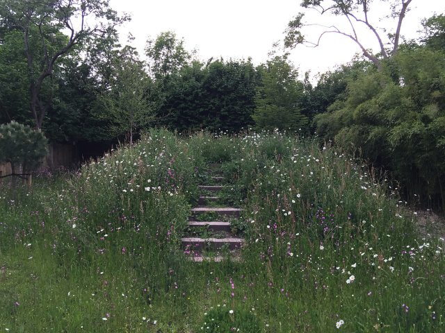 Meadow at Cator Road