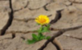 flower-887443_1920.jpg