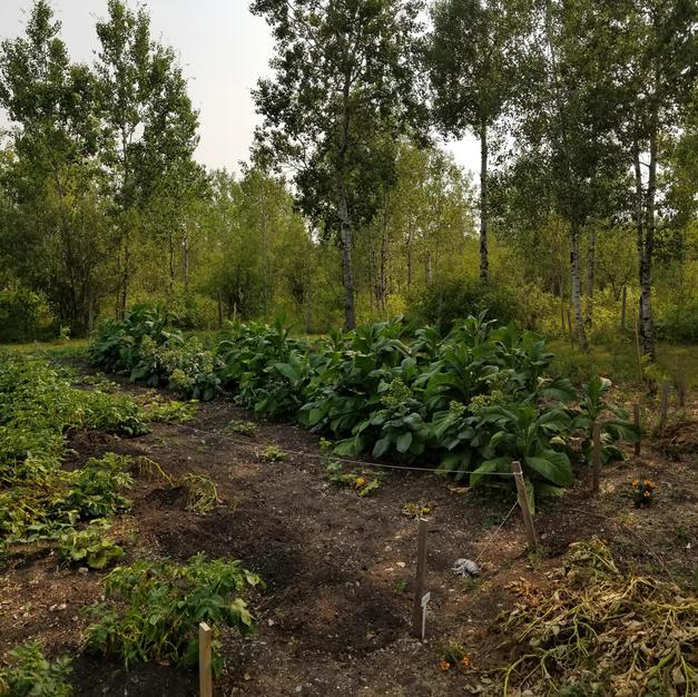 Tobacco Garden