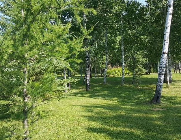 Treed Land