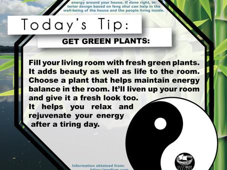 DIY Feng Shui - Get Green Plants