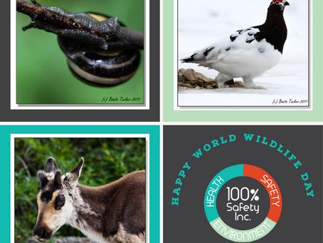 Happy World Wildlife Day 2021