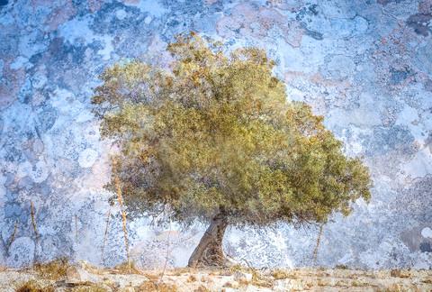"""""""Mount Tabor Oak"""""""