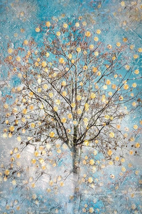 """""""Spring Tree"""""""