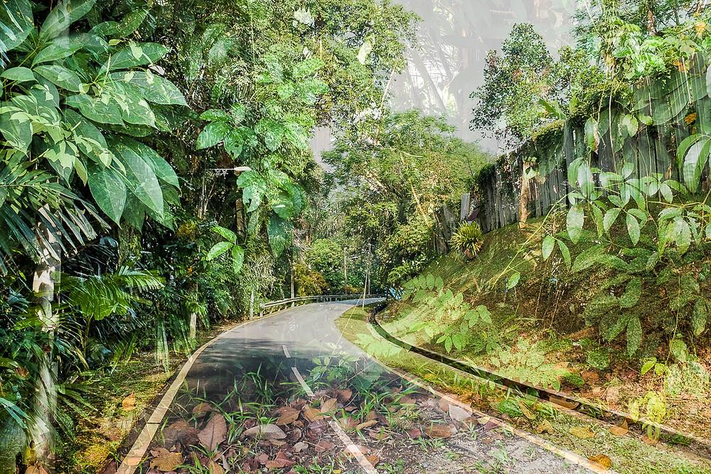 solitary road through vegetation