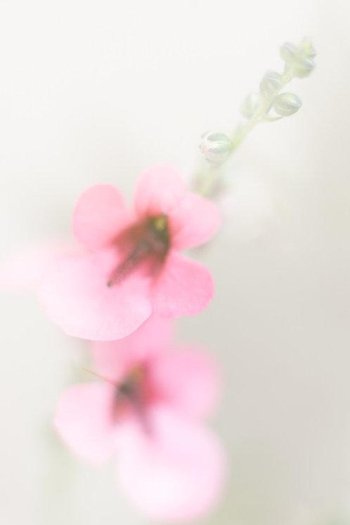 """My Secret Garden - 06"""