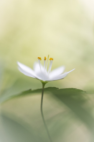 """My Secret Garden - 03"""