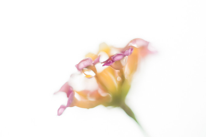 """My Secret Garden - 07"""