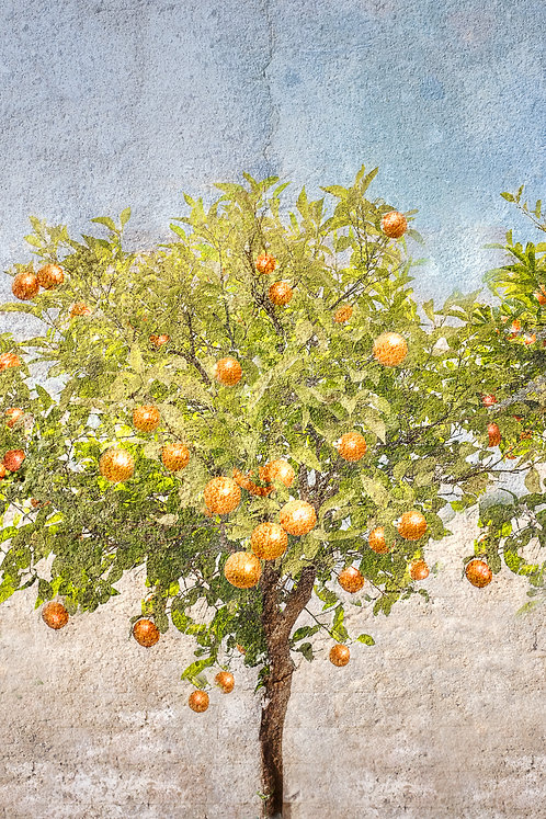 """""""Orange Tree"""""""