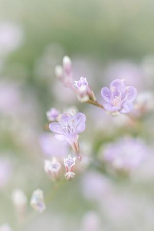 """My Secret Garden - 05"""