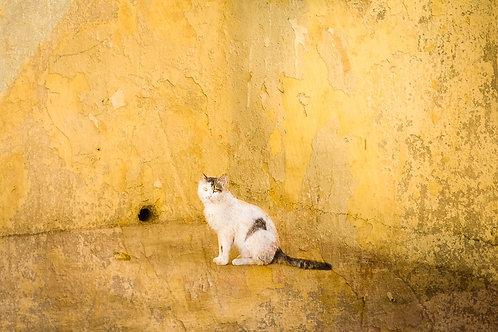 """Alley Cat"""