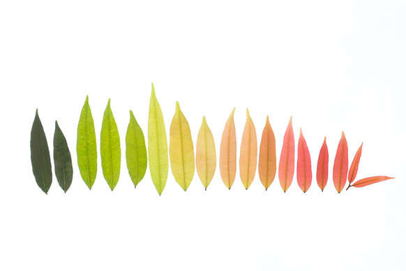 """""""Rainbow of Leaves"""""""