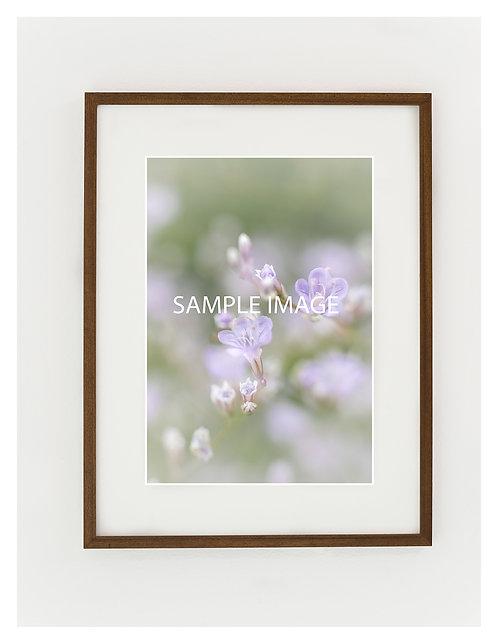 Framed Original Photography (54 cm x 41 cm)