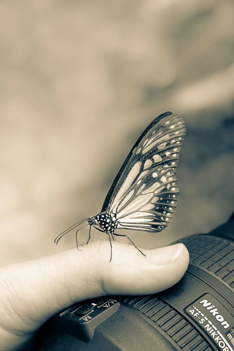 butterfly sits on photographer's hand