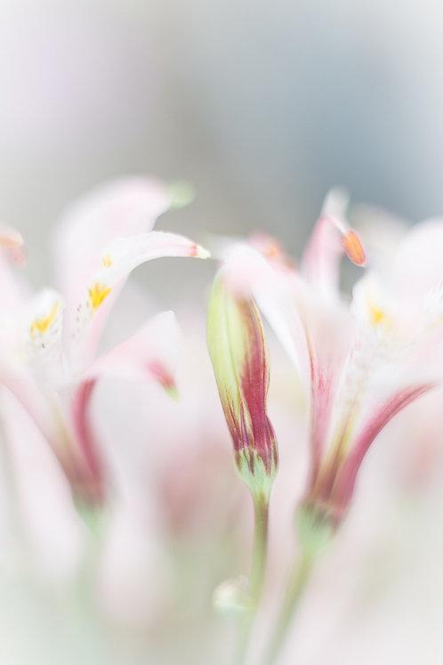 """ My Secret Garden - 02"""