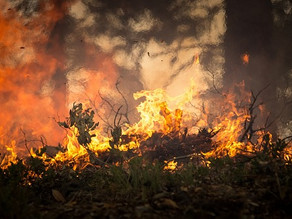 Prevention To Save Homes From Wildfires