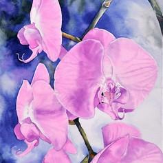 Princeton Plaza Orchid