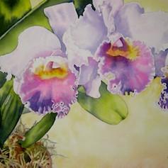 Filoli Orchid