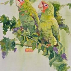 Russian Hill Parrots
