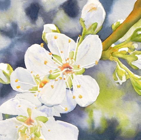 Blossom Hill Blossoms