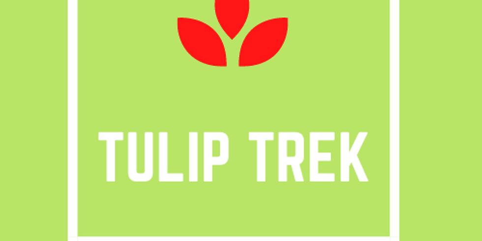 Tulip Trek 2021