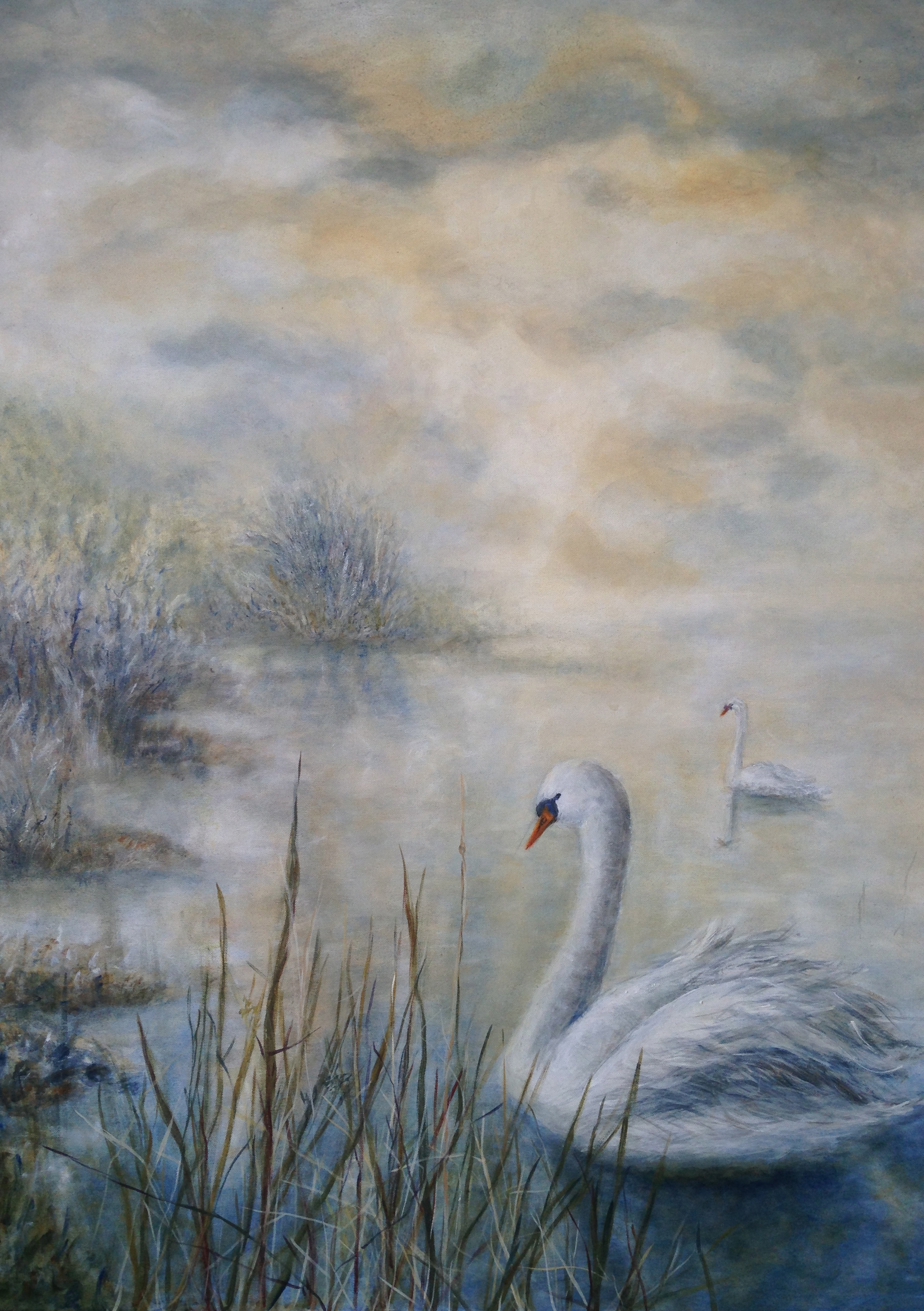 Swans in Calm Waters