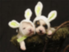 Easter Puppies.jpg