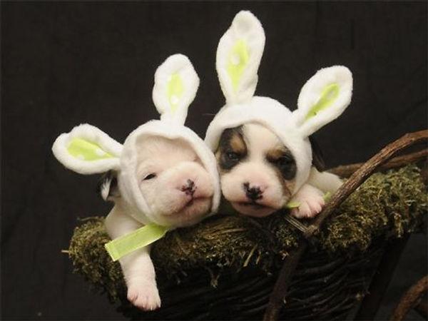 Easter Puppies.jpg