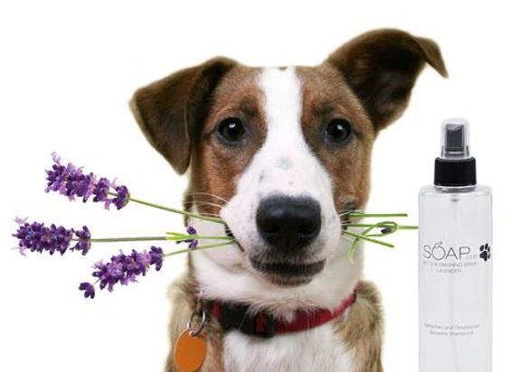 spray_lavender_v01_large.jpg