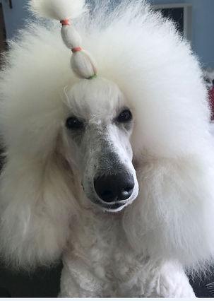 Pauline hair2.JPG