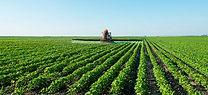 Fertilizante Foliar PROVERDE