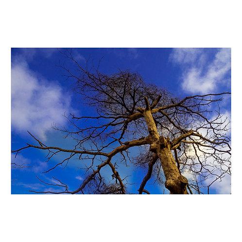 Árvore seca 1