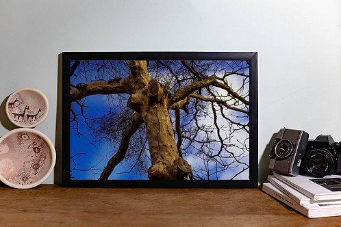 Árvore seca II
